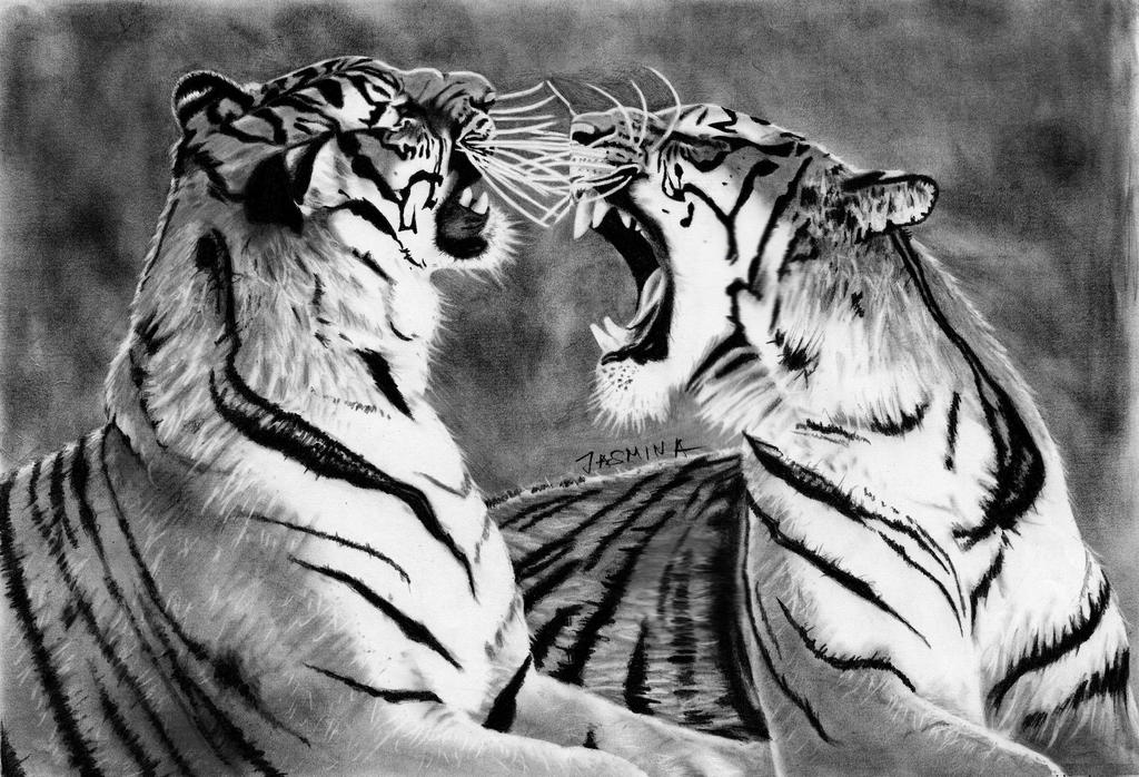 Graphite Drawing of Two Tigers
