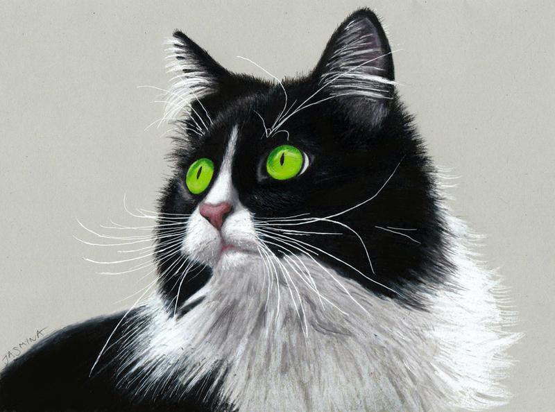 Pencil Drawing of a Tuxedo Cat