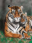 Colored Pencil Drawing: Tigress with Tiger Cub by JasminaSusak