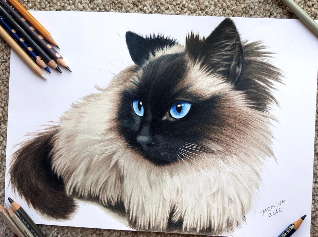 Pencil drawing of a subscriber's pet #2