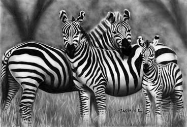 Zebra Family - Graphite Drawing by JasminaSusak