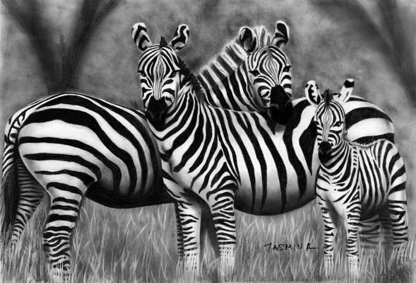 Zebra Family - Graphite Drawing