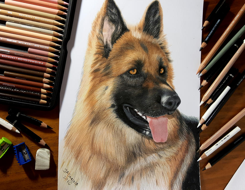 Colored Pencil Drawing of German Shepherd Dog by ...