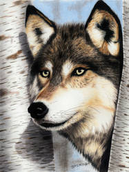 Colored pencil drawing of a Wolf in the Forest by JasminaSusak