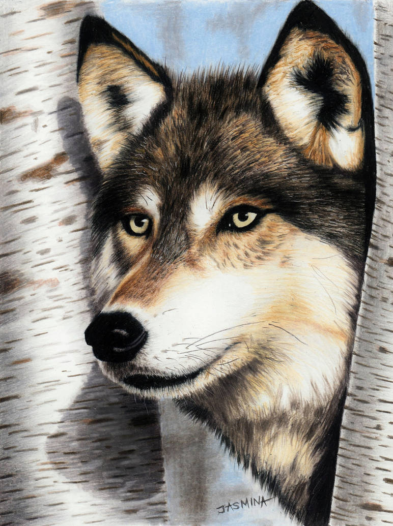 Colored pencil drawing of a Wolf in the Forest