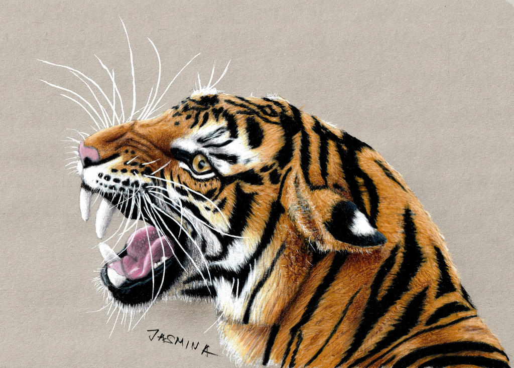 Colored Pencil Drawing of a Roaring Tiger