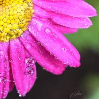 My beautiful flower: