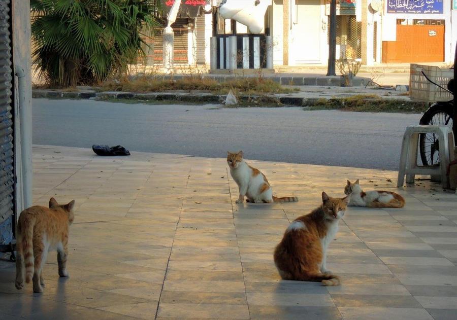 4 Cats by MunzerLens