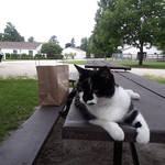 Clyde the barn cat