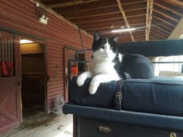 Bernie the barn cat