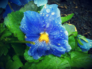 Rainy Blues