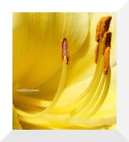 hello yellow by nakkitta
