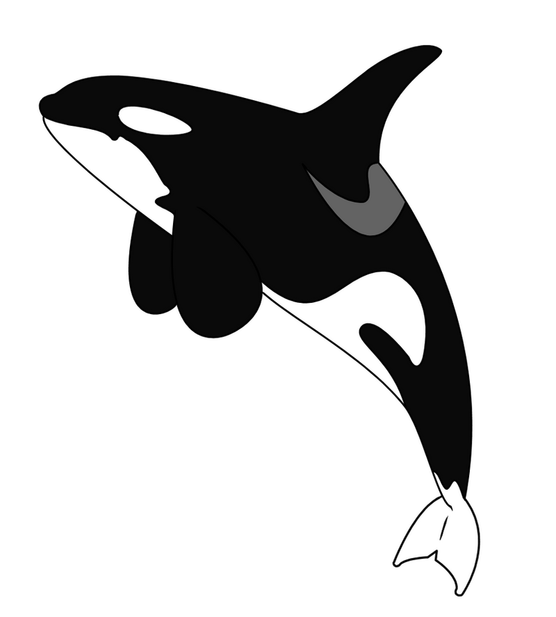 Line Drawing Whale : Orca tattoo version one by glitzychan on deviantart