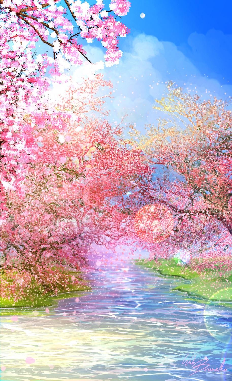 Cherry blossom by Web-brunetka