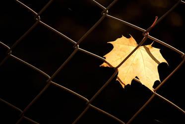 Herbstblatt by Czino
