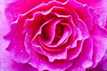 Dews by onioncube