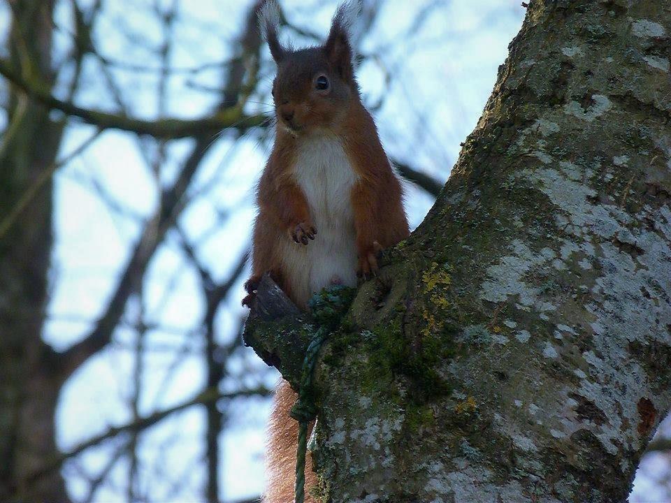Regal Red Squirrel by rhubarbandcustard12