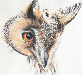 Horned Owl by agree-to-dissagree