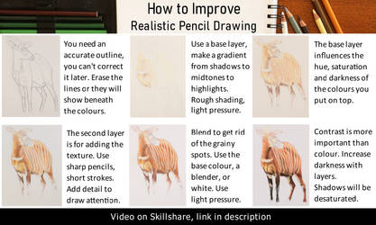 Tutorial: realistic drawing with colour pencils by agree-to-dissagree