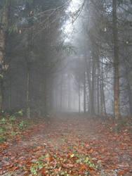 Fog15