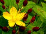 floral berries.....