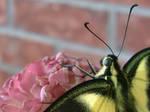 Butterfly 5516 by streboradnama