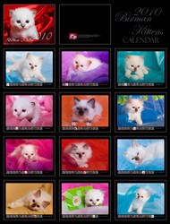 Birman Kittens - Calendar - by donia