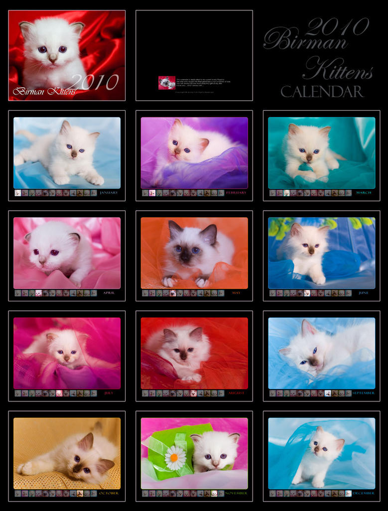 Birman Kittens - Calendar - by donia