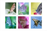 Butterflies by donia