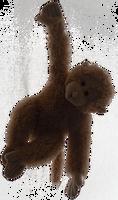 Cheeky Monkey Teddy