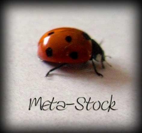 Meta-Stock's Profile Picture