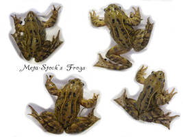Frogs Stock 3 by Meta-Stock