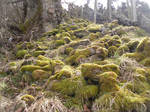 Mossy Forest Ground Stock 2