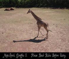 Giraffe Stock Image 3