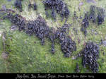 Raw Seaweed Texture