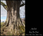 Large Tree Trunk Stock