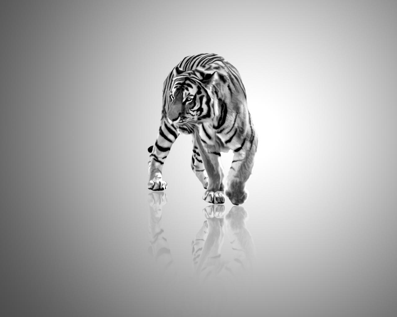 Tiger, black and white by tompot on DeviantArt
