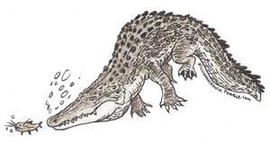 Crocodile by killigann