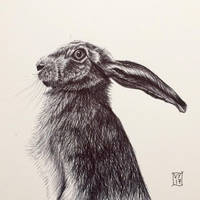 Biro Hare