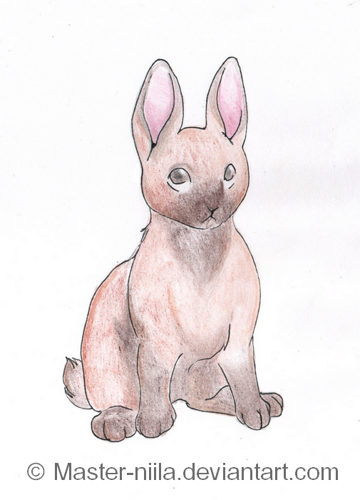 little bunny foo foo favourites by Killer-Lover-Hater89 on ...