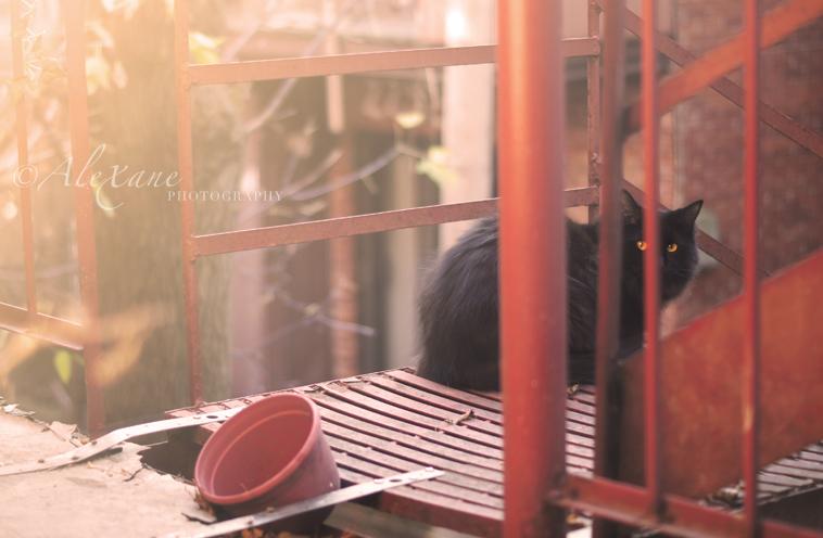 Mister Morning by Selene-Emotion
