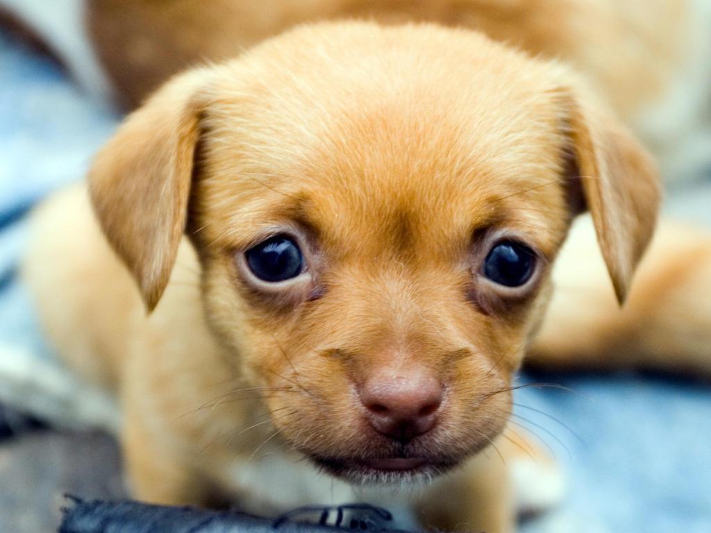 Animals Dogs Cute puppy by mody hashim on DeviantArt