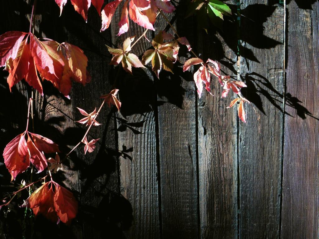 Fall Foliage by SilverTop