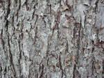 Bark 1 Stock