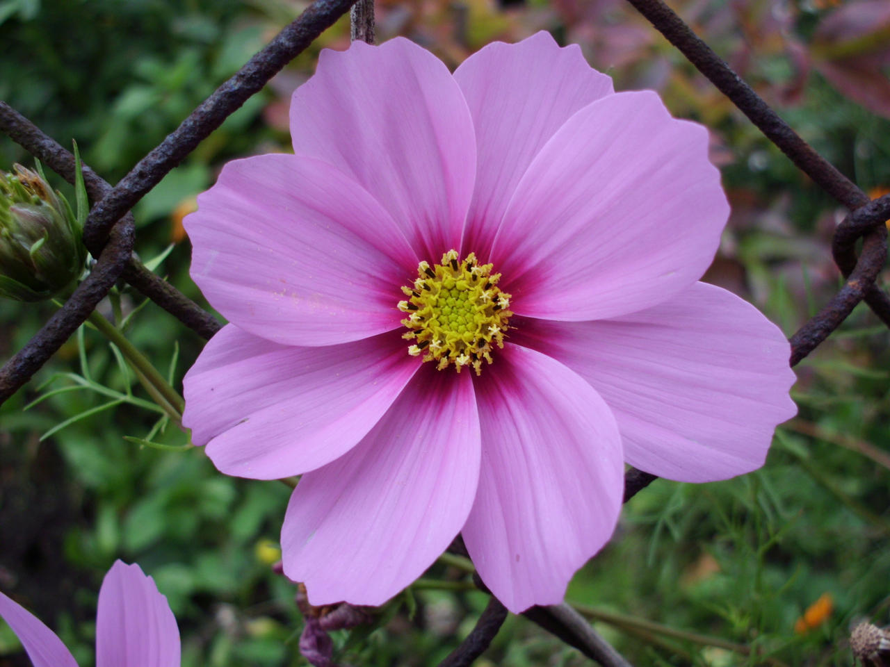 Blossom 06 by wuestenbrand