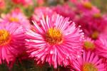 Blossom 26