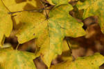 Colored Leaves 3 by wuestenbrand