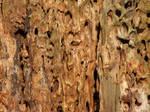 Wood 4 Stock