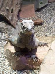 Ancient Reptile