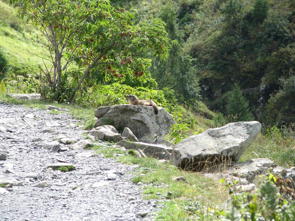 Place 248 - marmot's rock by Momotte2stocks